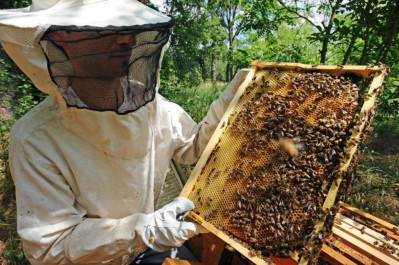 Chlef: Une saison catastrophique pour les apiculteurs