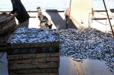 La gastronomie bénisafienne : le poisson
