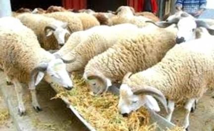 Le charbon, le foin et le couteau pour le mouton: Les accessoires d'une fête