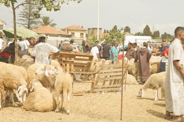 Marché d'ovins improvisé pour l'aïd el adha à Ouled Fayet. ©Algerie360
