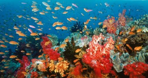 Richesses naturelles : Des nouvelles réformes pour protéger le récif corallien