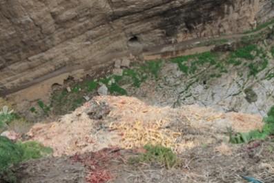 Souk Ahras – Hygiène publique: Les abats de volailles, un danger pour la santé publique