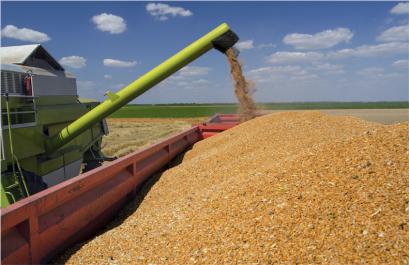 Exportation du blé français: après une année sombre, le soleil reparaît