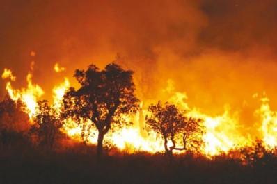 Guelma: 42 victimes des incendies de forêt recensées