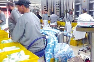 Ils sont chargés de réfléchir sur l'amélioration de la production locale: Des experts au chevet de la filière lait