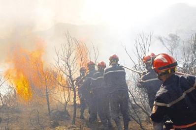 Bilan des incendies à Bouira: Des pertes considérables
