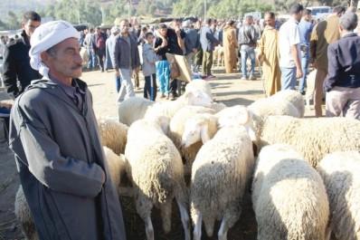 Aïd el Adha: élargissement des points de vente des moutons à l'ensemble des wilayas