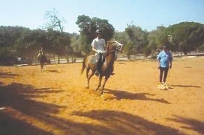 Les équidés du Club hippique sous-alimentés: On achève bien les chevaux à Annaba