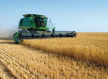 Céréaliculture à Aïn Defla Une production de près de 1,47 million de quintaux réalisée