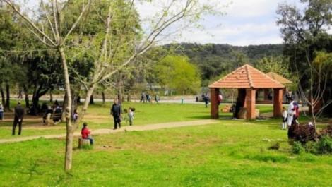 Les forêts, unique alternative des familles djelfies aux joies du littoral