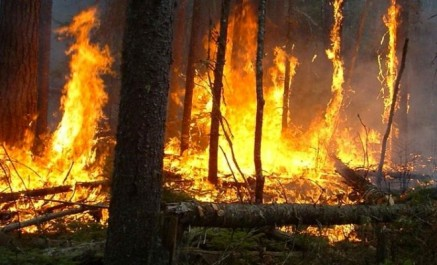 Une commission d'enquête parlementaire «spécial feux de forêt»