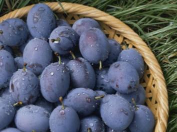 Tlemcen: La prune d'Aïn Nehala fait recette