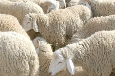 Relizane: 13 sites pour la vente de moutons