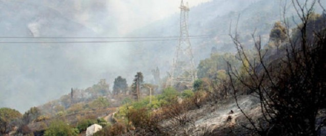 Incendies: Plusieurs individus présumés impliqués arrêtés à Annaba et Bouira