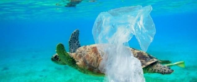 Les débris de plastique en mer confondus avec de la nourriture tuent des milliers de poissons