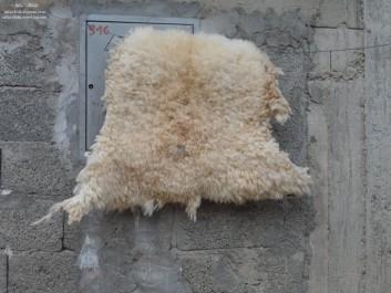 Aïd El-Adha : Quelle fin pour les peaux de moutons égorgés ?
