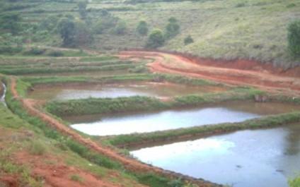Bouira: La pisciculture dans le monde agricole