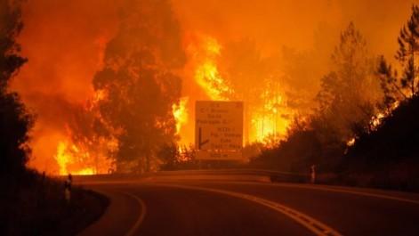 Portugal: 141.000 hectares de forêts partis en fumée