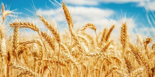 Exportation des produits alimentaires utilisant des intrants subventionnés: Le point de situation avant fin août
