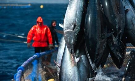 Pêche: l'Algérie se lance dans l'engraissement du thon rouge