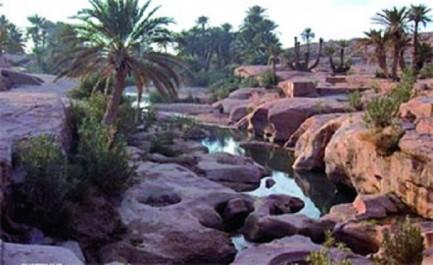 Tiout (Nâama): Une oasis en quête de valorisation