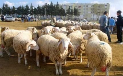 Putréfaction de la viande du mouton de l'Aïd: L'inspection vétérinaire de Bouira préconise une campagne nationale de contrôle