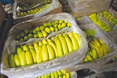 Mostaganem: saisie de 26 qx de fruits de contrebande