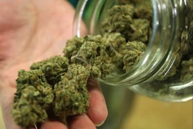 Blida: Saisie de 12 grammes de marijuana