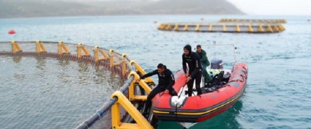 Chlef occupe la première place nationale en aquaculture marine
