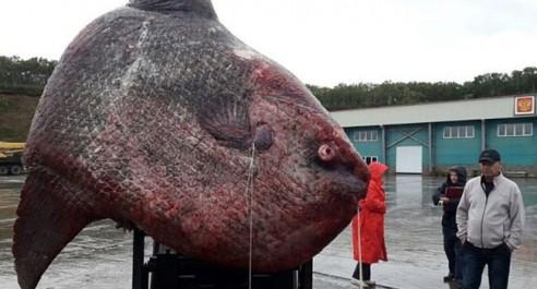 Tipaza: la pêche de la sardine, ses aléas et ses maux