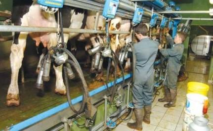 Algérie: Hausse de la production du lait de vache dans la wilaya de Souk Ahras (GAPEL)