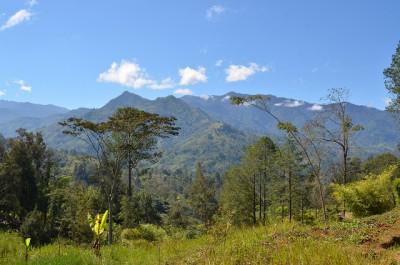 Création prochaine de quatre forêts récréatives au titre de l'investissement privé