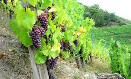 Agroalimentaire : Boumerdès étale la richesse de son potentiel