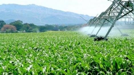 L'Algérie, sur le point d'atteindre l'autosuffisance en produits agricoles