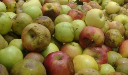 Une quantité de fruits impropres à la consommation saisie à Tizi Ouzou