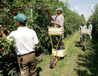 Intérêt croissant des jeunes pour l'investissement agricole
