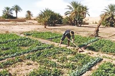Sonelgaz leur réclame 14 milliards de centimes de factures impayées: Les agriculteurs d'Adrar dans la tourmente