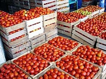 Une production de 16 000 qx de tomates d'arrière saison